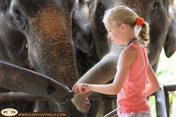 Elephant Hills Camp Feeding time
