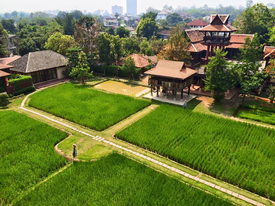 Siripanna Silent Walking Mediation through rice field