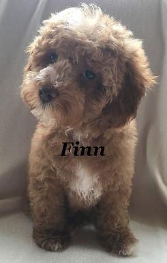 Finn card.jpg
