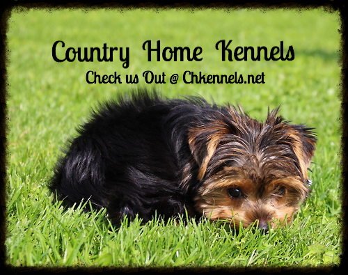 Dog Kennel | Calgary | Country Home Kennels