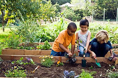 garden-blog-9.40.25-PM.jpg