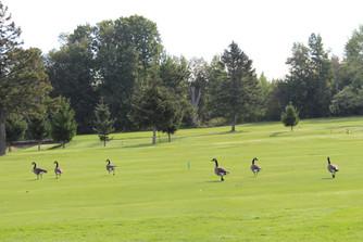 ARCH Golf Classic 2021 (48).JPG