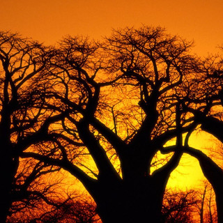 The Kalahari, Botswana