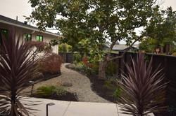 Front yard landscape