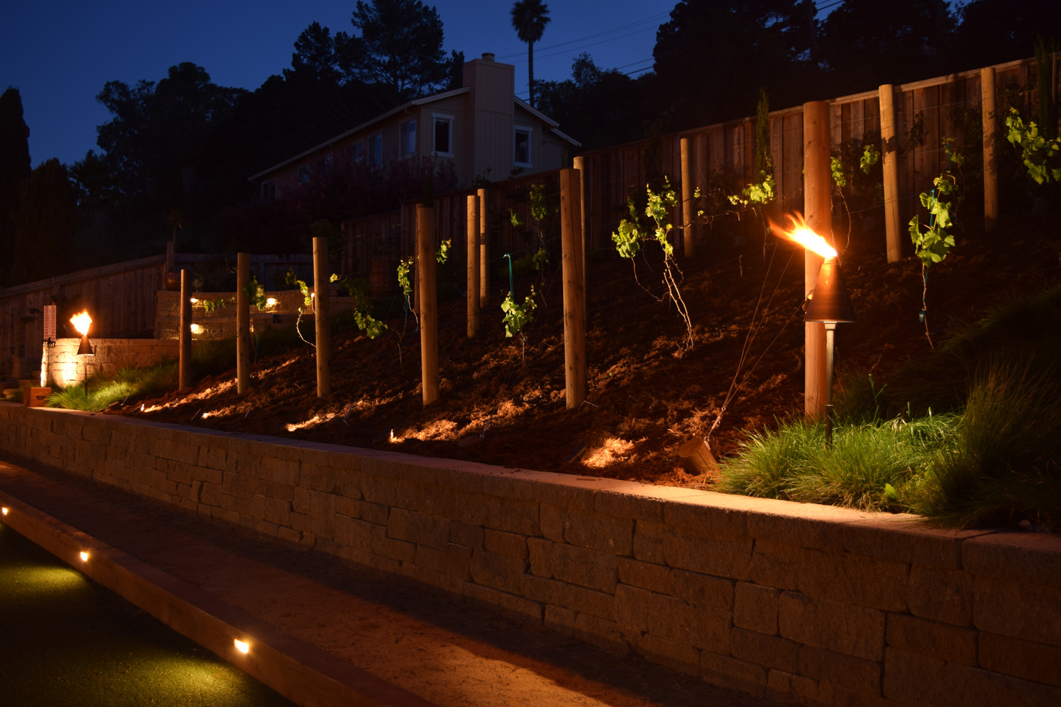 Vineyard lights