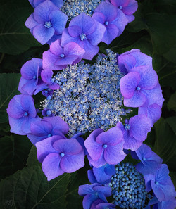 Blue Hour Beauty