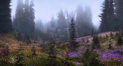 Foggy Paradise