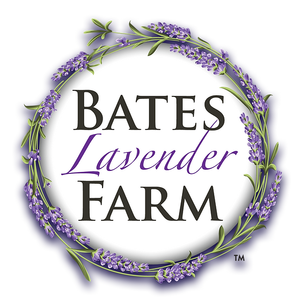 bates lavender-dark shadow.png