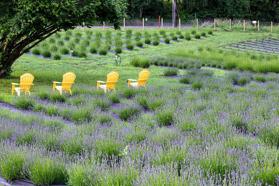 Lavender_Chairs_3.jpg