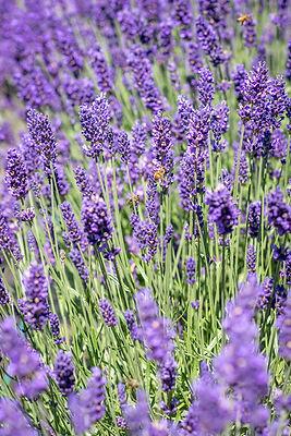 bees website.jpg