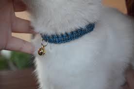 Le collier paracorde