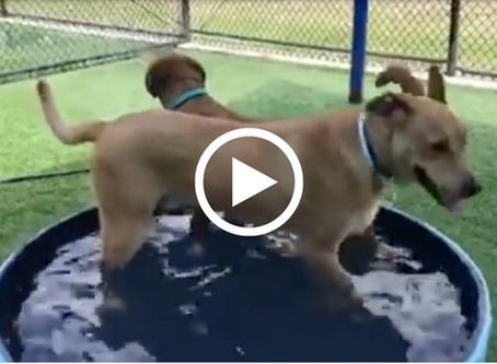 Meet These Pups Who Play Together!