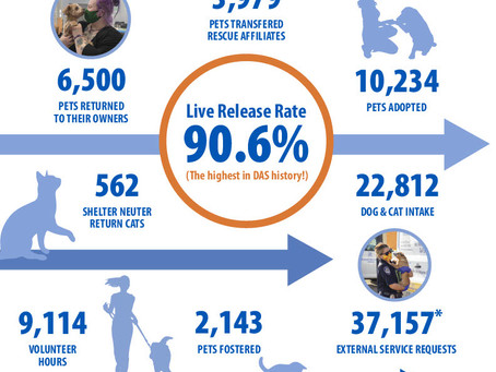 A Year of Compassionate Care for Animals