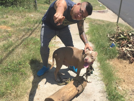 """""""In South Dallas, There's Not Just a Food Desert, There's a Pet Care Desert Too."""""""
