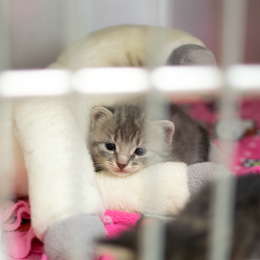 Peek Inside the Kitten Nursery