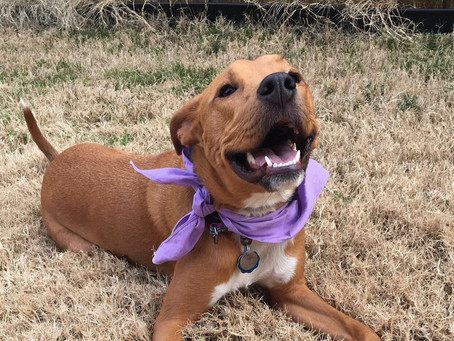 Meet Some Dallas Animal Services Heroes!