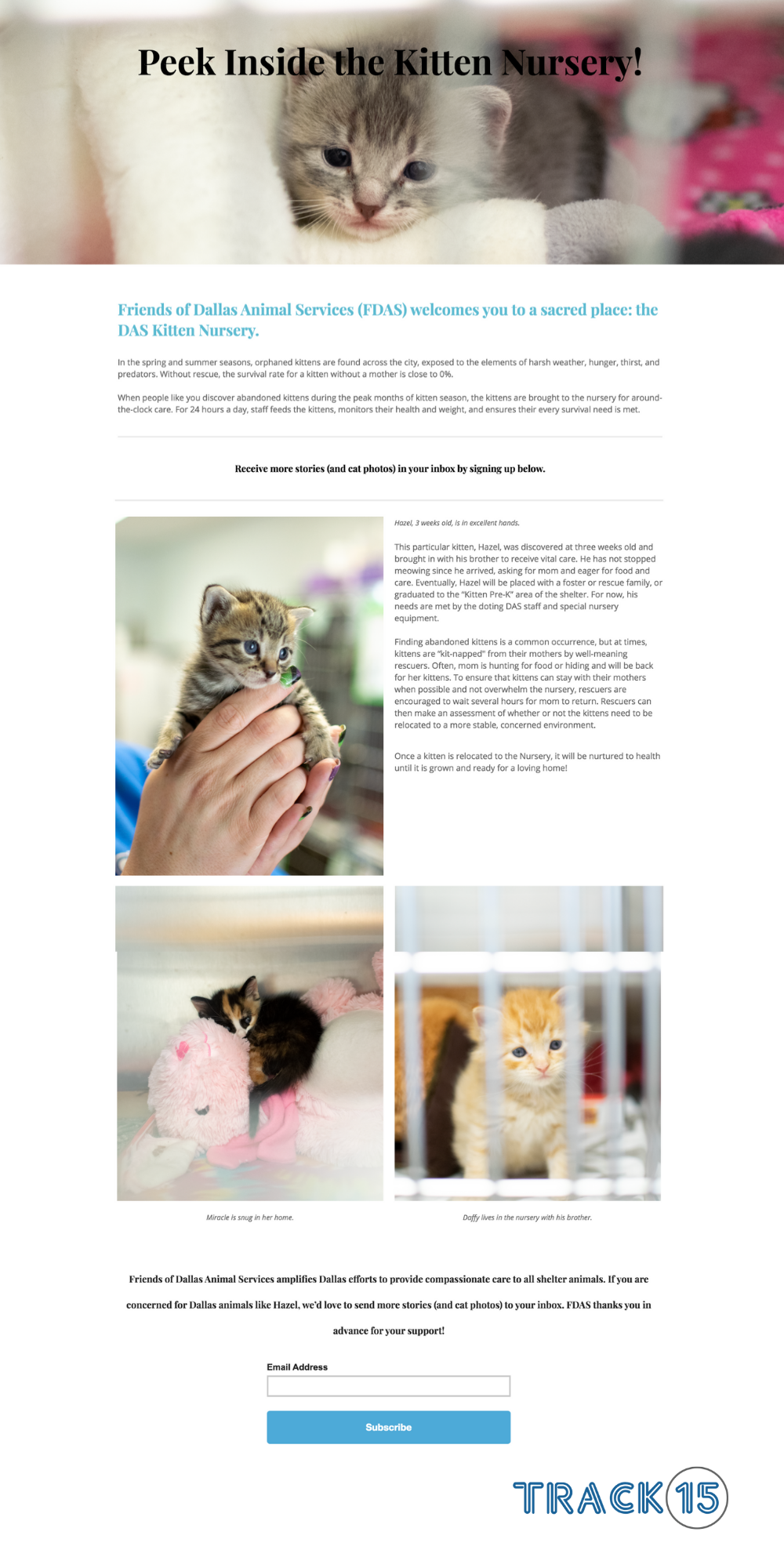 Friends of Dallas Animal Services Landing Page: Kitten Nursery
