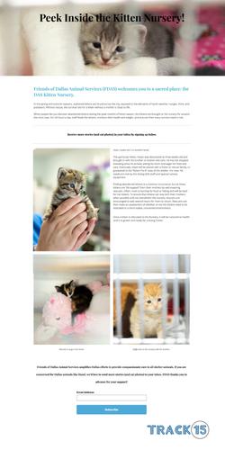 Friends of Dallas Animal Services Landing Page: Kitten Nursery