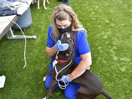 DAS Helped Pets During Hurricane Laura