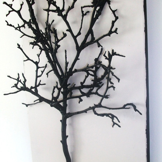 El fruto de la rama mas alta