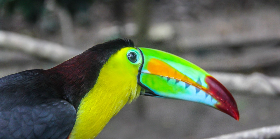 Macaw Mountain Bird Park. Copan, Honduras.