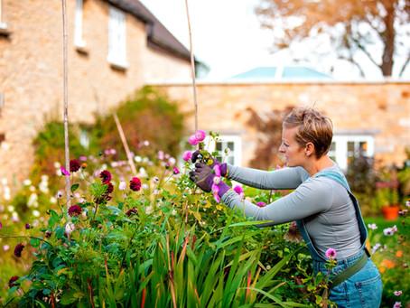 5 Top Tips For Beginner Gardeners