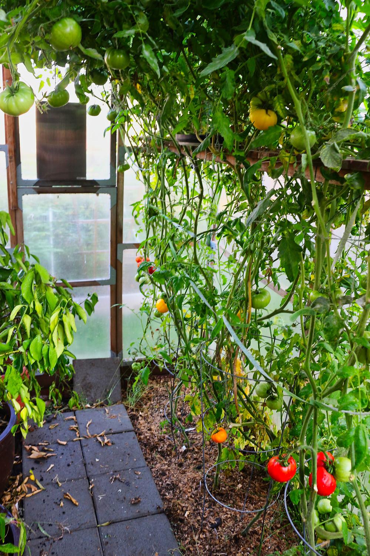 Dr. Jaqueline Brockert organic garden