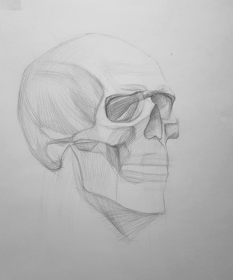 Набросок черепа человека карандашом