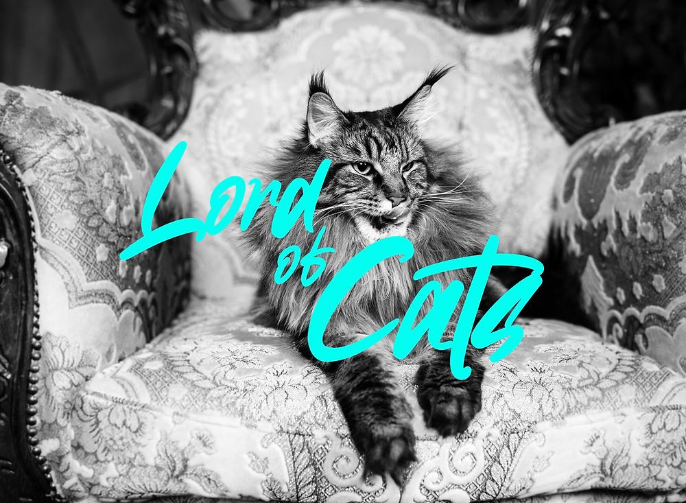 Les chats sont ils les leviers de croissance de demain ?