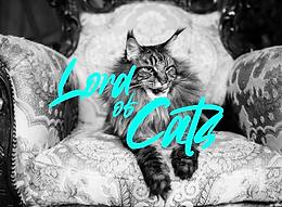 Les chats sont-ils les leviers de croissance de demain ?