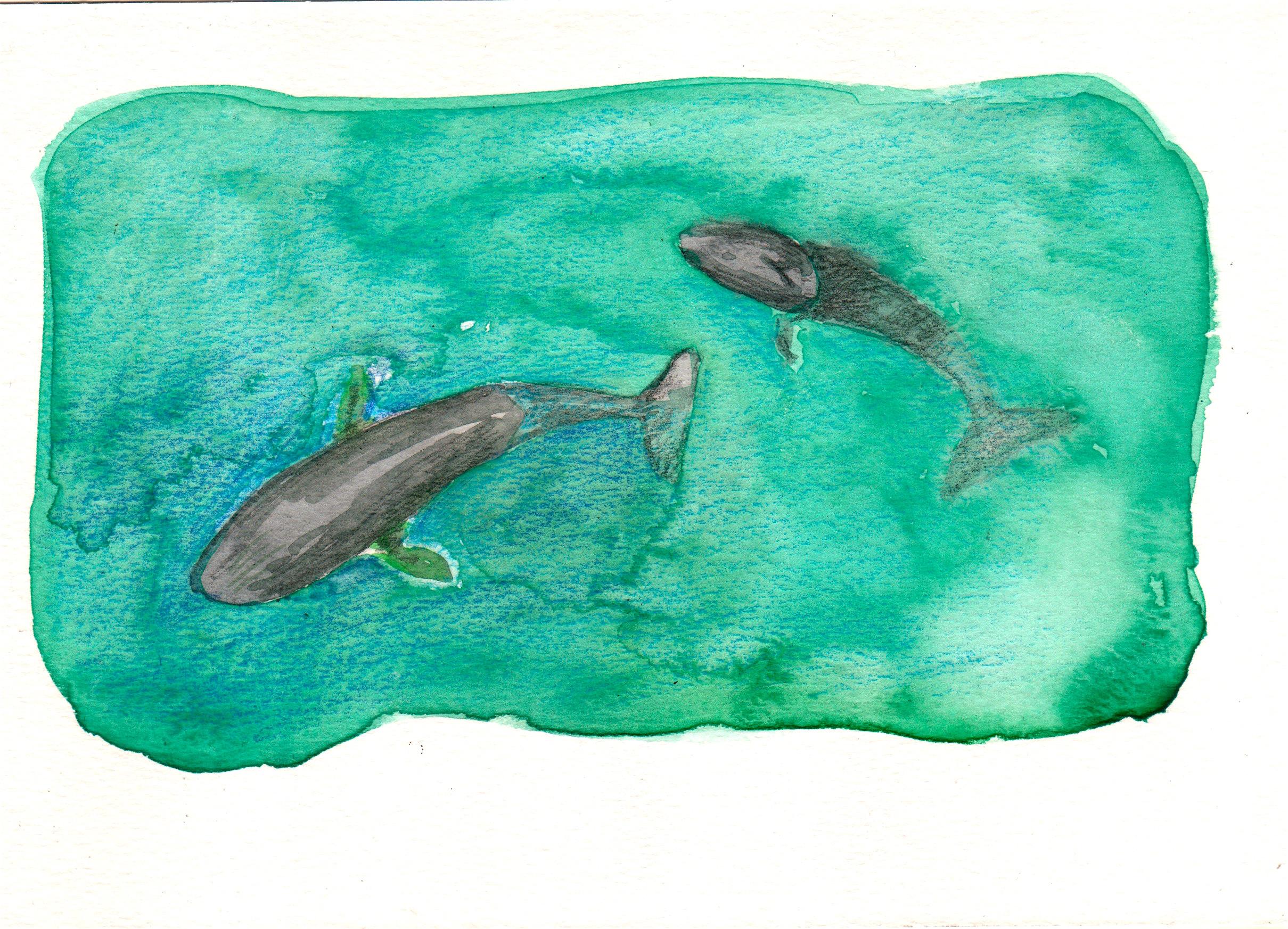 ballenas en un fiordo austral