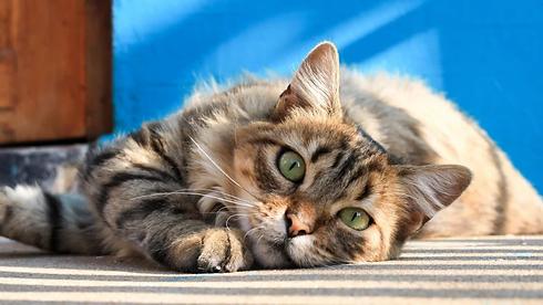 bluecat.webp