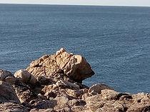 L'ours de la côte sauvage