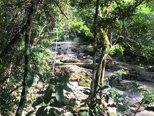 Ayahuasca to COVID-19