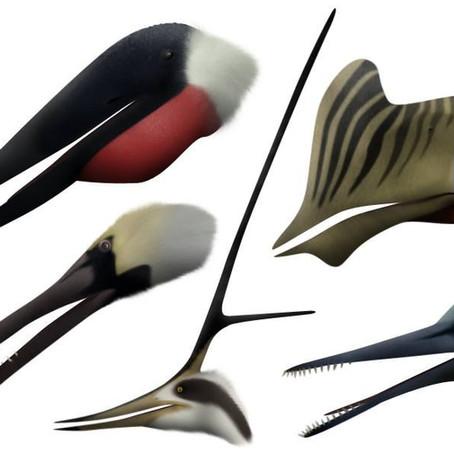 Meet the Pterosaurs