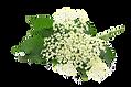 fleursureau_detouree.png