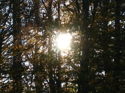 Just a sun & trees photo