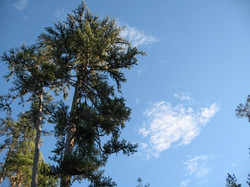 The sky, the trees & clouds