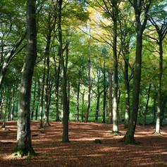 Grass Wood