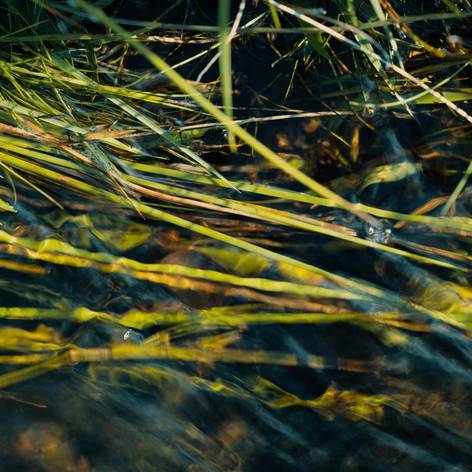 Reeds and grass in stream