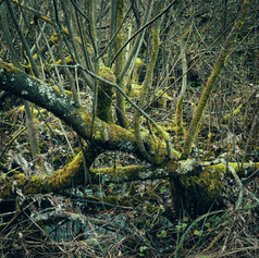 The Swamp! Nature's chaos at Malham Tarn