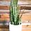 Thumbnail: MOON PLANT POT