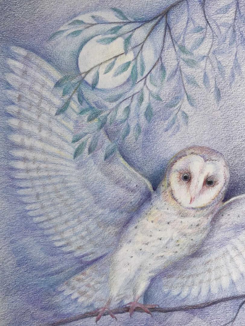 Julia Byrne - Barn Owl