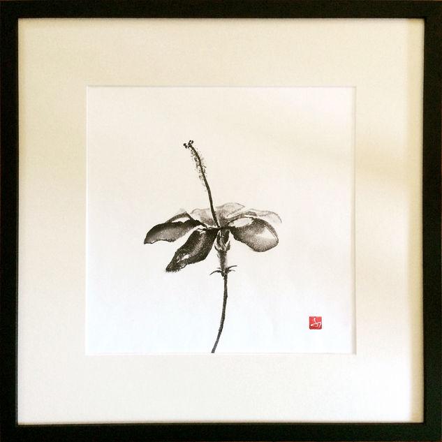 Midori Furze.Hibiscus.jpg