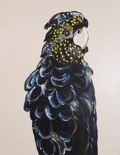 Julianne Abercrombie - Red Tailed Black Cockatoo