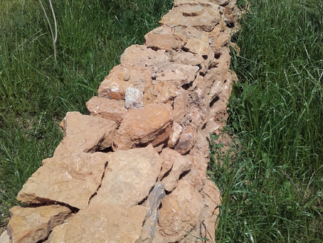 Lebensraum Trockenmauer / Hecke