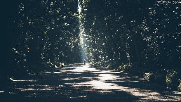 Walk to Sunlight.jpg