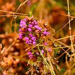 LR foret automne-38.jpg