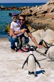 pingouins afrique du sud