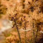 LR foret automne-2.jpg